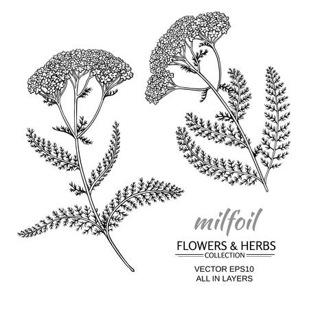 milfoil flowers set on white background