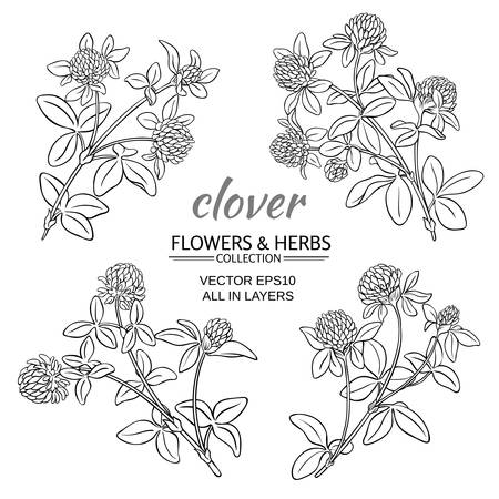 trifolium: clover flowers set on white background