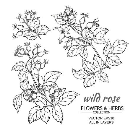 rose hips: dog rose hips set on white background