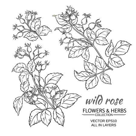 red rose: dog rose hips set on white background