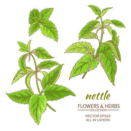 nettle plant set on white background Illustration