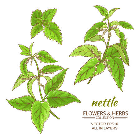 nettle plant set on white background Иллюстрация