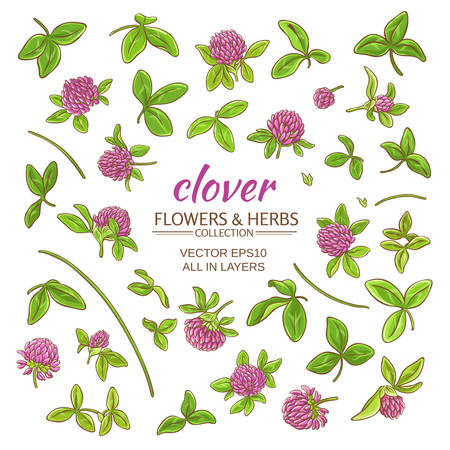 trifolium: clover plant set on white background