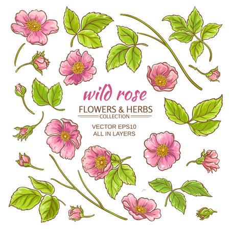 rosa canina fiori impostato su sfondo bianco Vettoriali