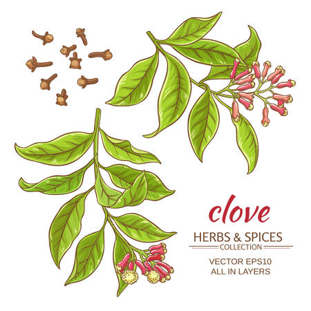 clove branches set on white background