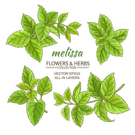 melissa herb set on white background Çizim