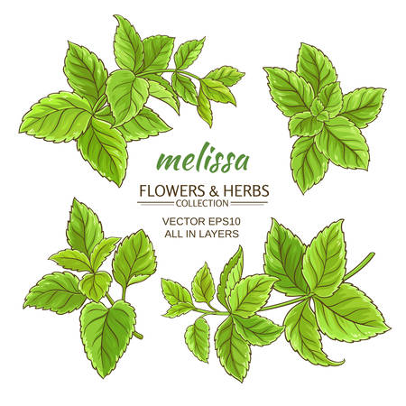 melissa herb set on white background Illustration