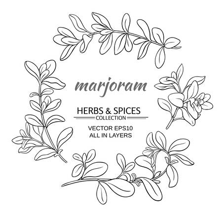 marjoram: marjoram herb set on white background