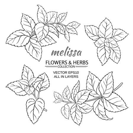 melissa herb set on white background Vettoriali