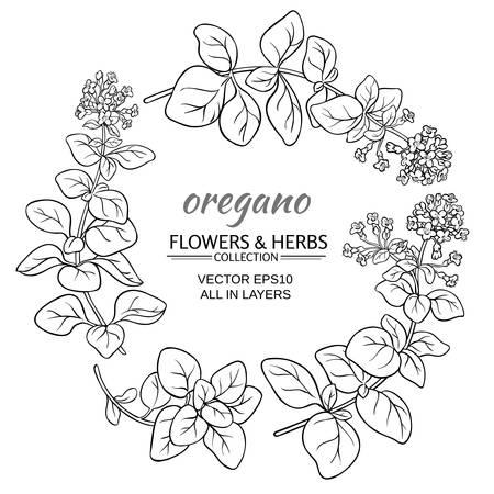 oregano: oregano herb set on white background
