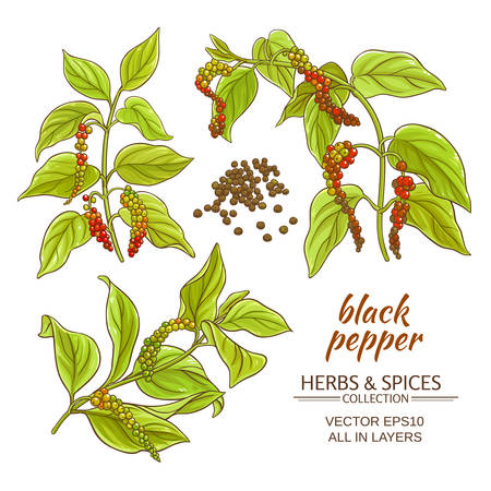 black ground pepper branches on white background Ilustracja