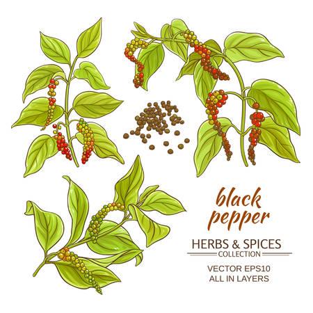 black ground pepper branches on white background Illustration