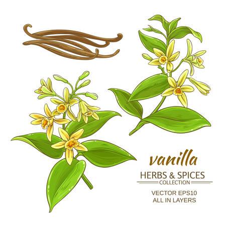 vanilla flowers vector set on white background Иллюстрация