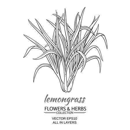 lemongrass plant vector illustration on white background Ilustração