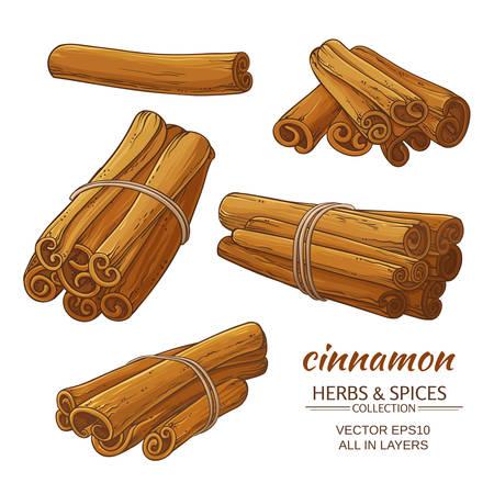 cinnamon sticks vector set on white background
