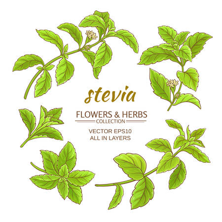 stevia leaves vector set on white background