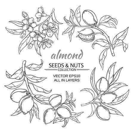 almond branches vector set on white background