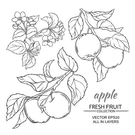 apple branches vector set on white background
