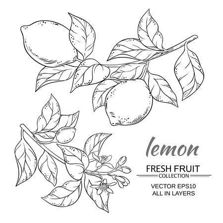 lemon branches vector set on white background