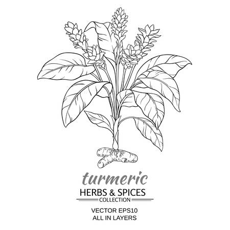 turmeric plant vector illustration on white background Illustration