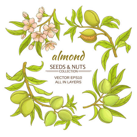 almond branches  set on white background