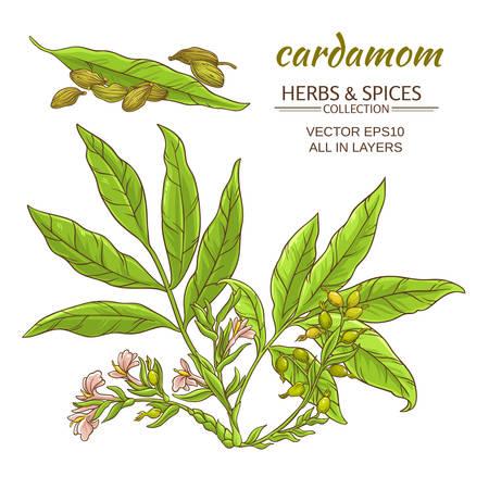 カルダモンの植物が背景白に設定