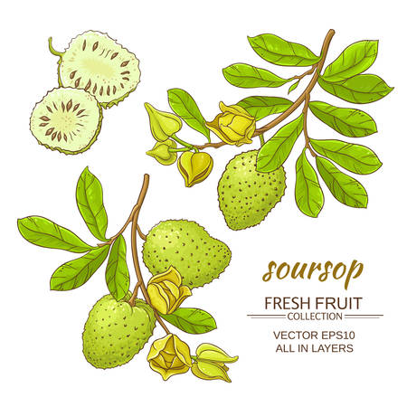 soursop branches  set on white background