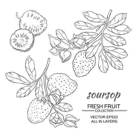 soursop branches vector set on white background Reklamní fotografie - 67870477