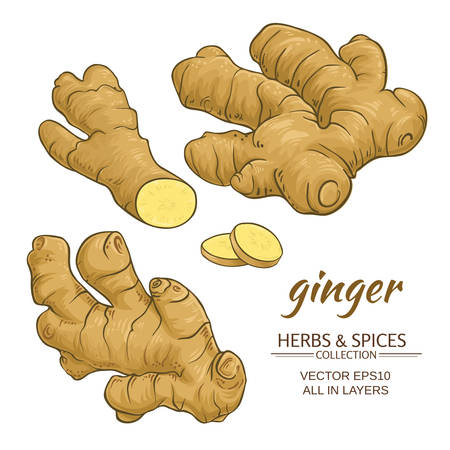 ginger roots vector set on white background Ilustração