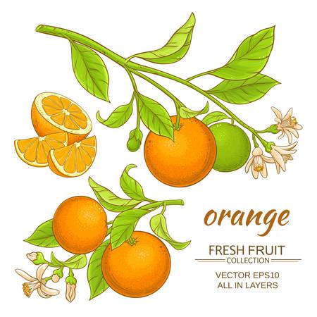 Vecteur branches branches orange sur fond blanc Banque d'images - 67870482