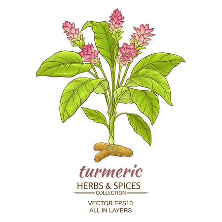 turmeric plant vector illustration on white background  イラスト・ベクター素材