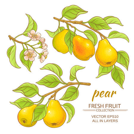 pear branches vector set on white background