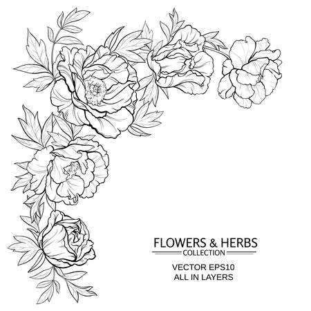 vector frame with peonies on white background