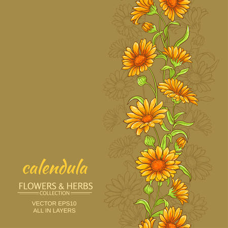 calendula: calendula vector background