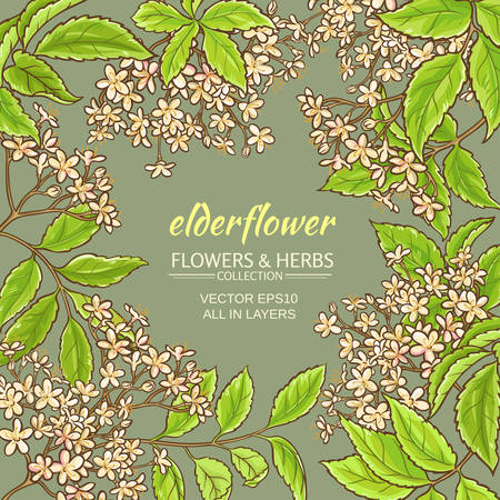 elderflower branches vector frame on color background