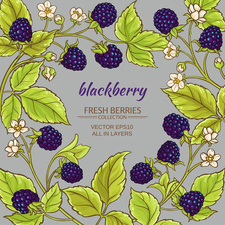blackberry branches vector frame on color background