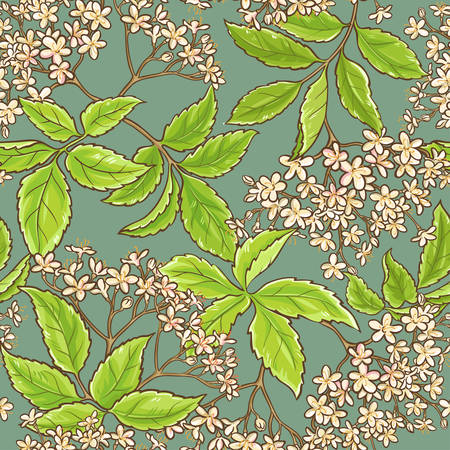 elderflower vector seamless pattern on color background