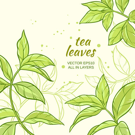 Illustration with green tea leaves on color background Illustration