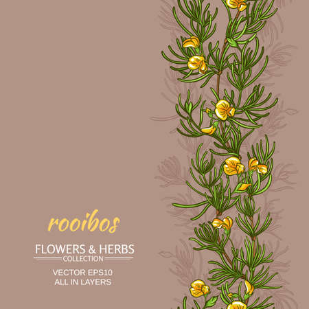 Rooibos plant vector pattern on color background Illustration
