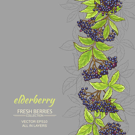 Elderberry branches vector pattern on color background