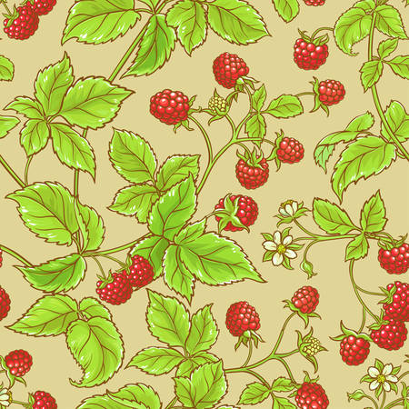raspberry vector seamless  pattern on color background