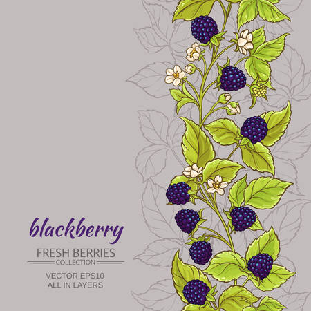 blackberry vector background Ilustração