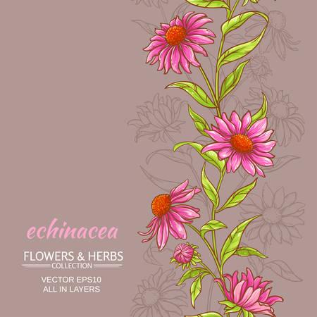 echinacea: echinace purpurea vector background