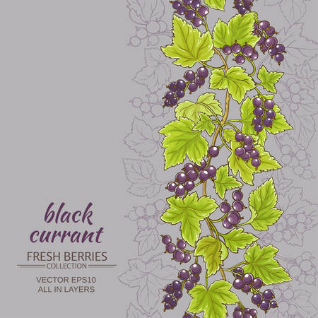 black currant  vector background