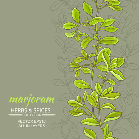 marjoram vector background