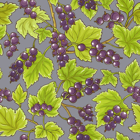 black currant  vector pattern