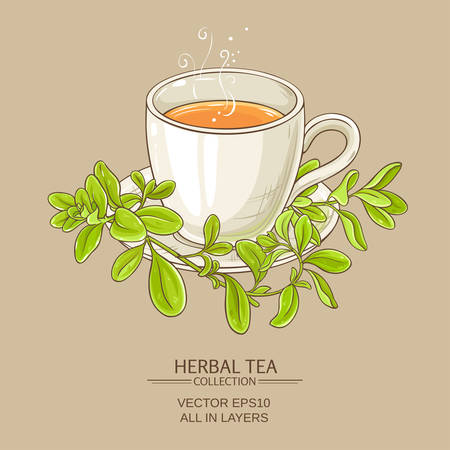 cup of marjoram tea on color background