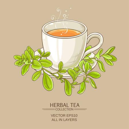 cup of marjoram tea on color background