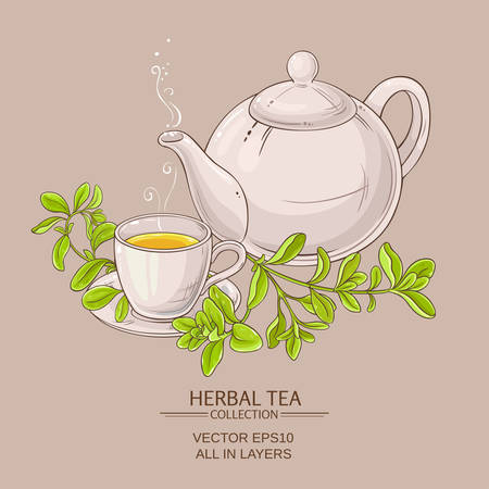 cup of marjoram tea and teapot Illustration