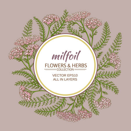 yarrow: Yarrow flowers vector frame on color background Illustration